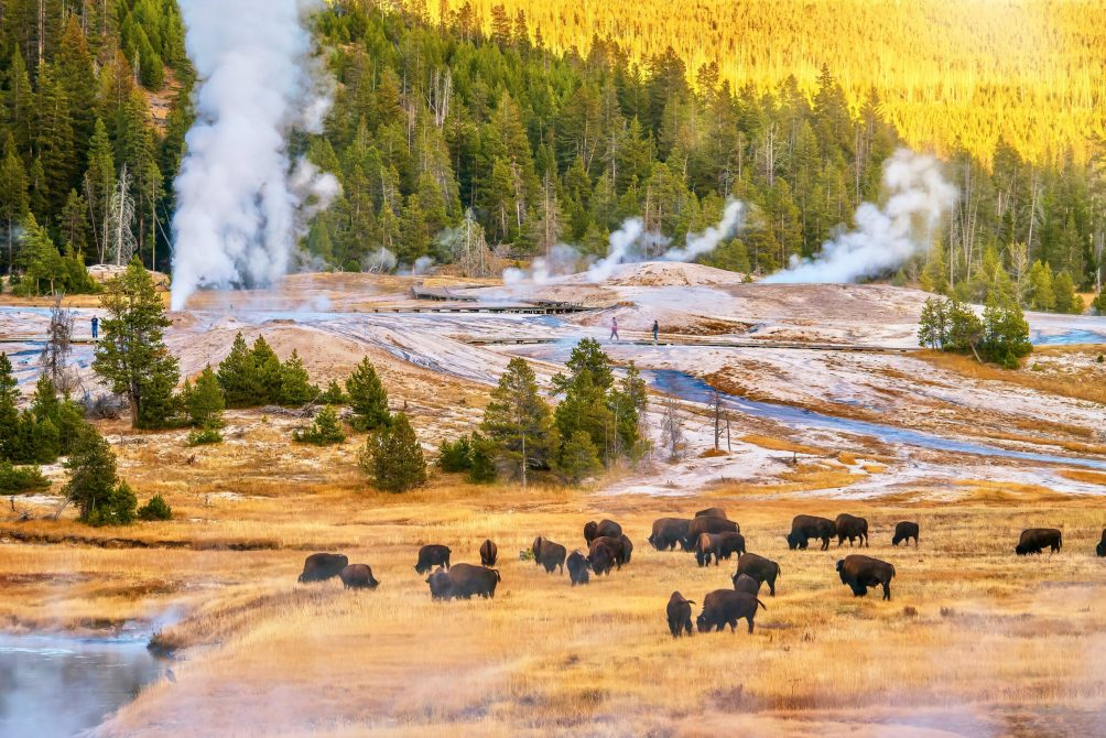 A,Sunset,Landscape,At,The,Upper,Geyser,Basin,In,Yellowstone